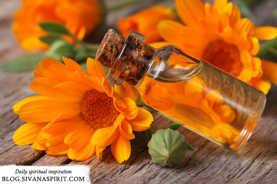 The Science and Spirituality of Flower Essences, Part III: Uncertainty - Sivana Blog