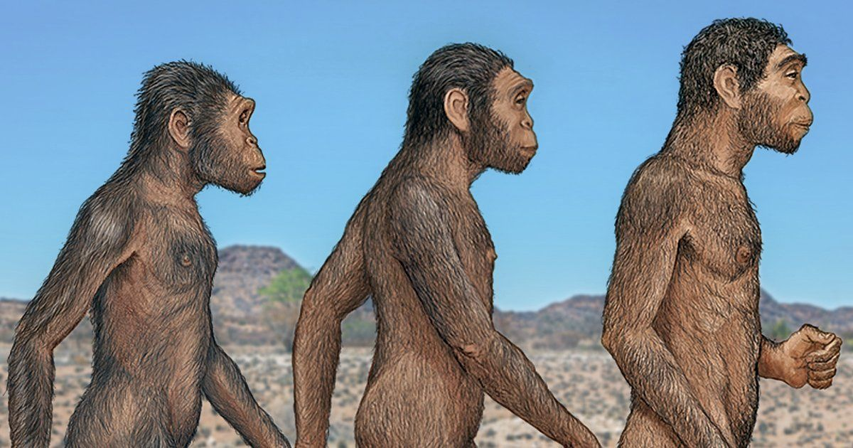 Groundbreaking Fossils of 3 DIFFERENT Human Species Found