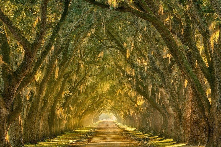 4. Oak Alley along the Mississippi River outside New Orleans, Louisiana - 20 Magical Tree Tunnels You Should Definitely Take A Walk Through