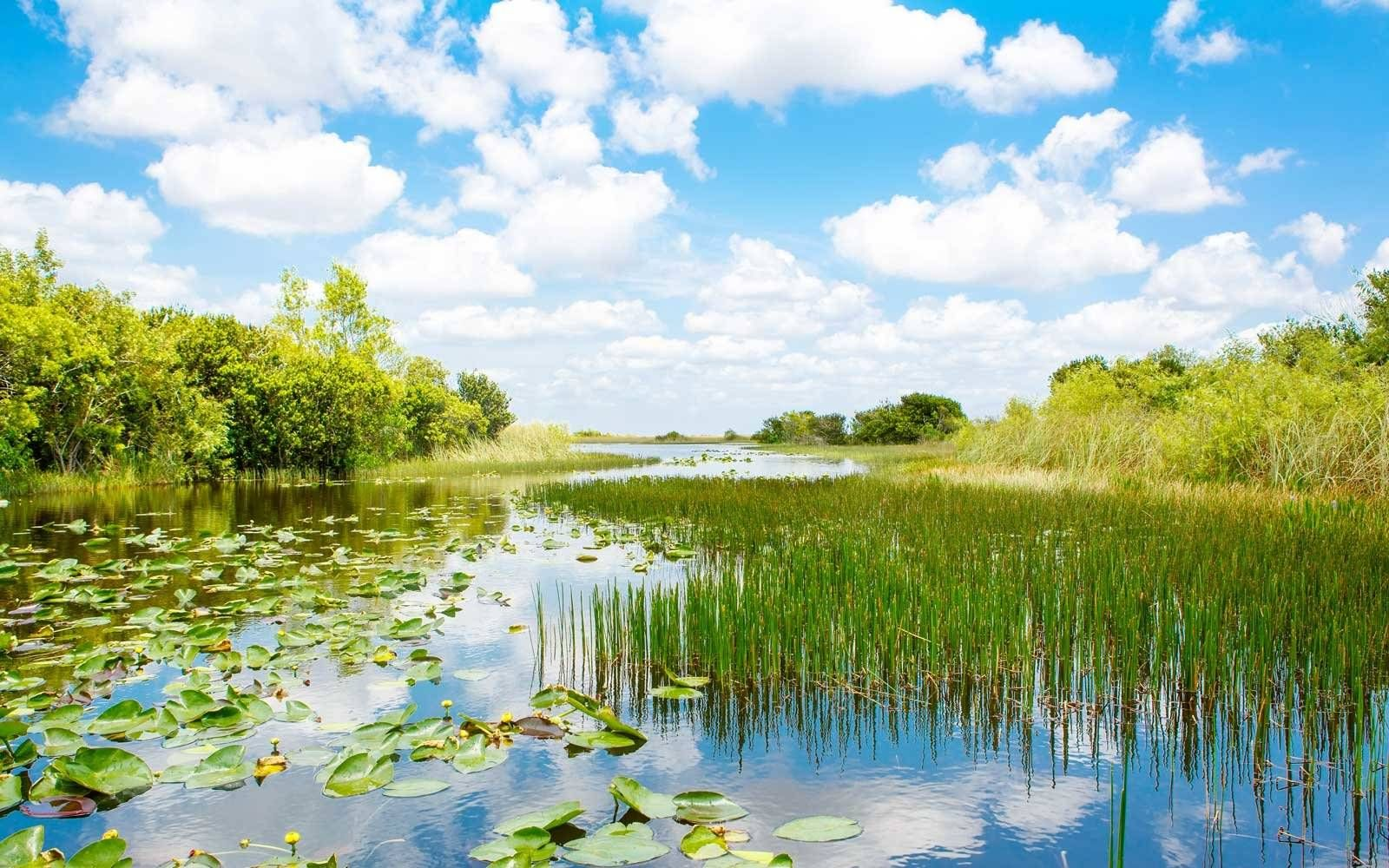 Best National Parks To Visit In Summer National Parks Usa Everglades National Park Everglades National Park Florida