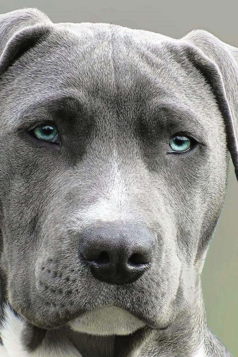 Pet Dog Training Tips Many Individuals Believe That Dog Training