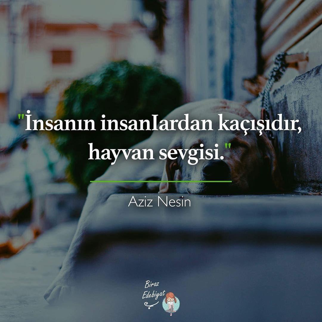 Insanin Insanlardan Qacisidir Heyvan Sevgisi Aziz Nesin Sozlər ədəbiyyat Cool Words Mysterious Words Quotations