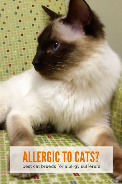 Best Cat Breeds for People With Allergies #catbreeds