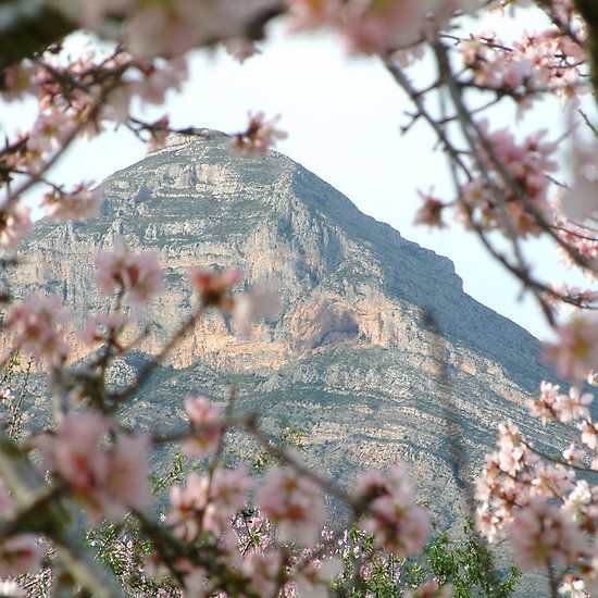 Montgo through the blossom, Javea. Photography by Fay Hughes
