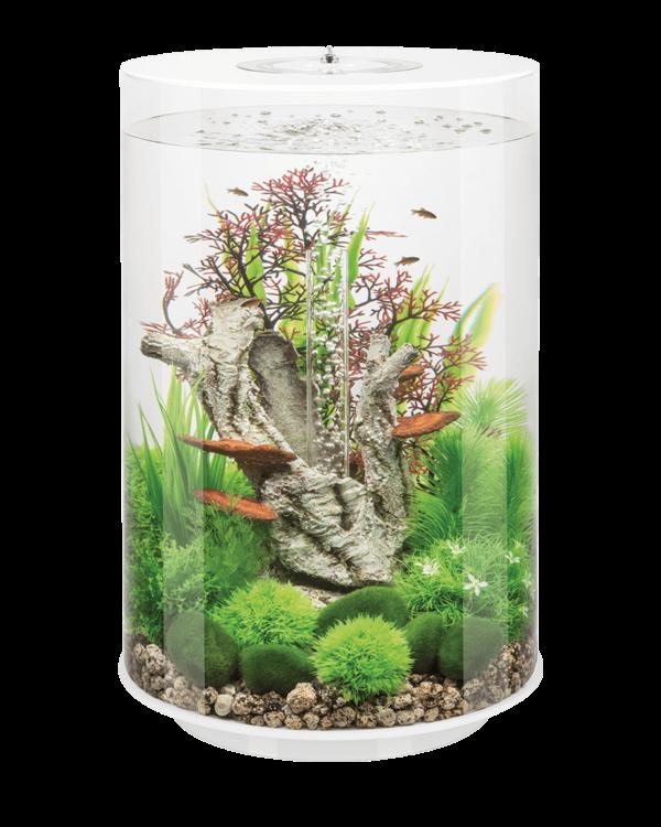 My Next Fish Tank Small Fish Tanks Aquarium Design Fish Tank