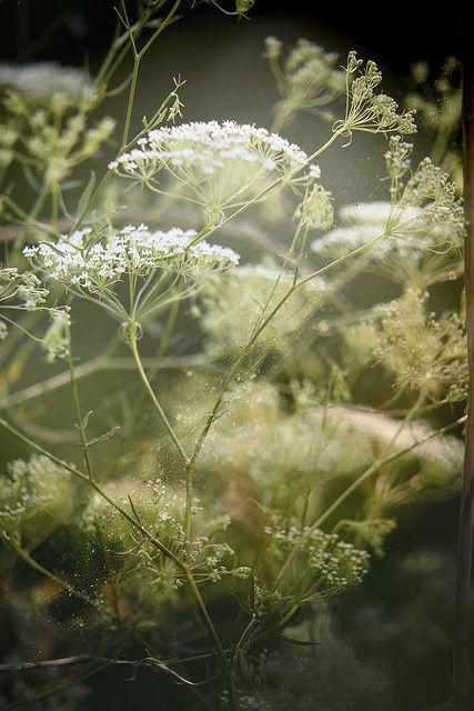 Come Tenderness Fotos Blumen Pflanzen Blumen Wiese