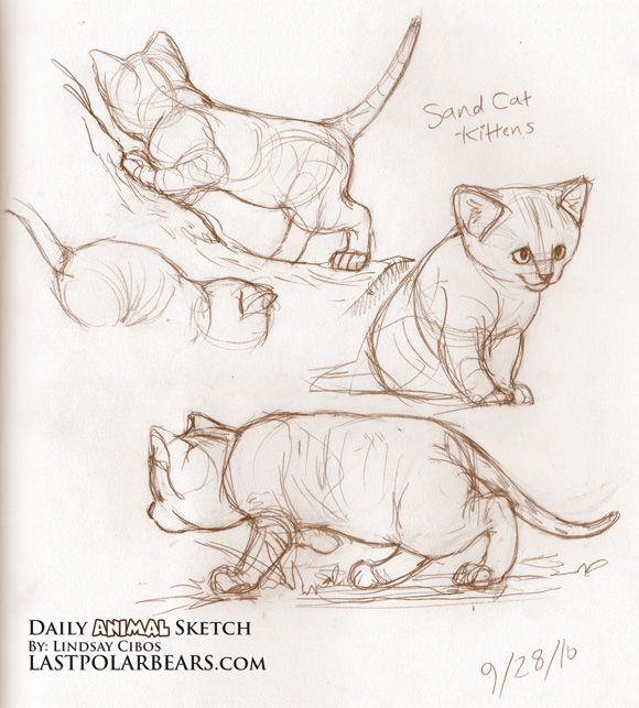 daily animal sketch sand cat kittens the last of the polar bears