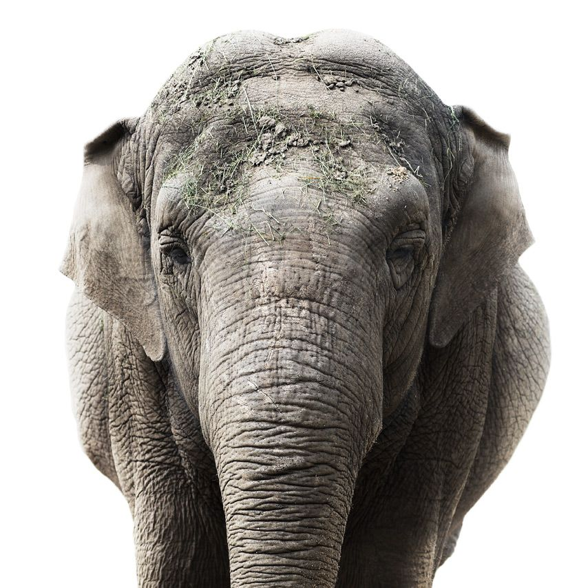 Amazing Animal Portraits By Morten Koldby PHOTOGRAPHY - The most striking animal portraits youll ever see by morten koldby