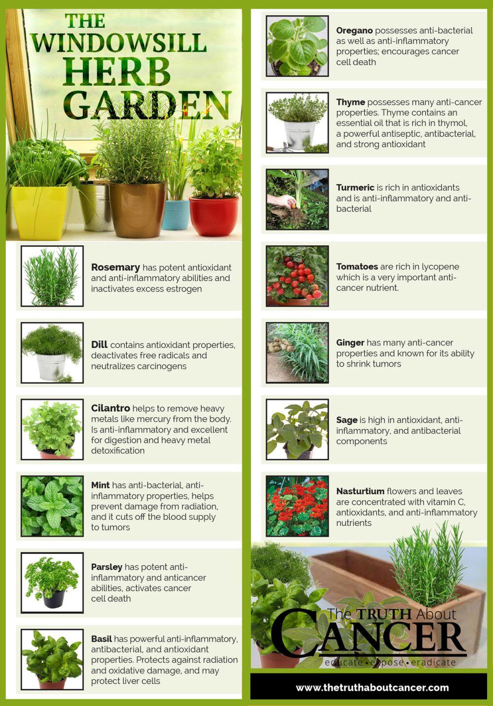 14 cancer fighting plants for your indoor herb garden gardens