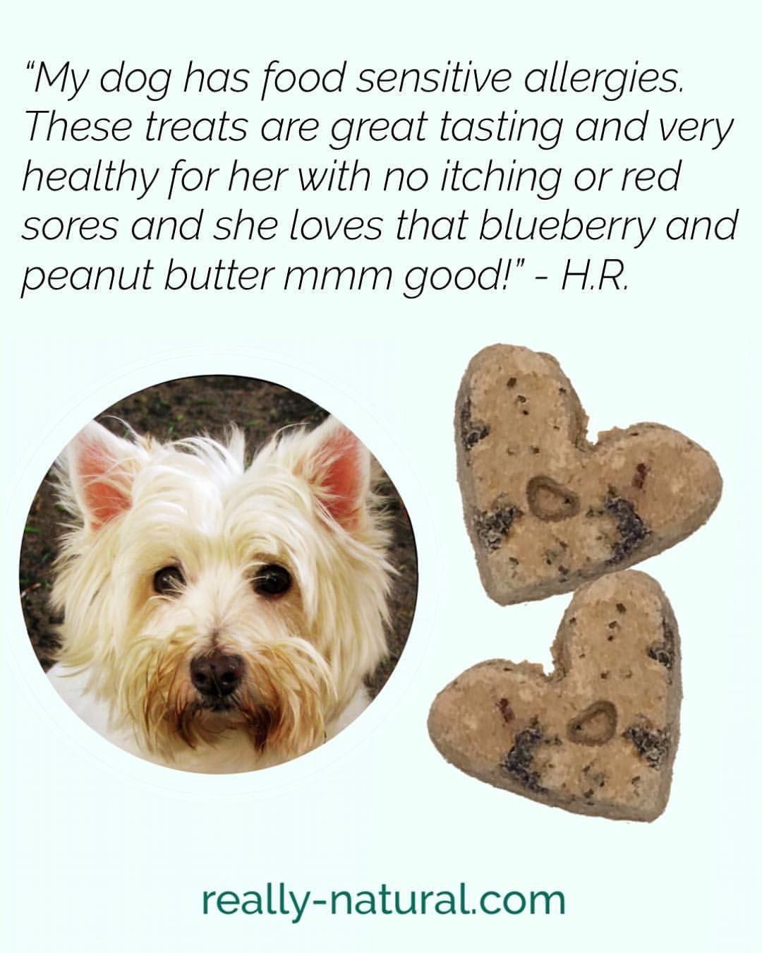 Yummy Treats Adored By Dogs With Natural Ingredients Rich In Omega 3 Fatty Acids For Healthy Skin And Coat Plus Pet Par Natural Pet Pet Parent Healthy Pets