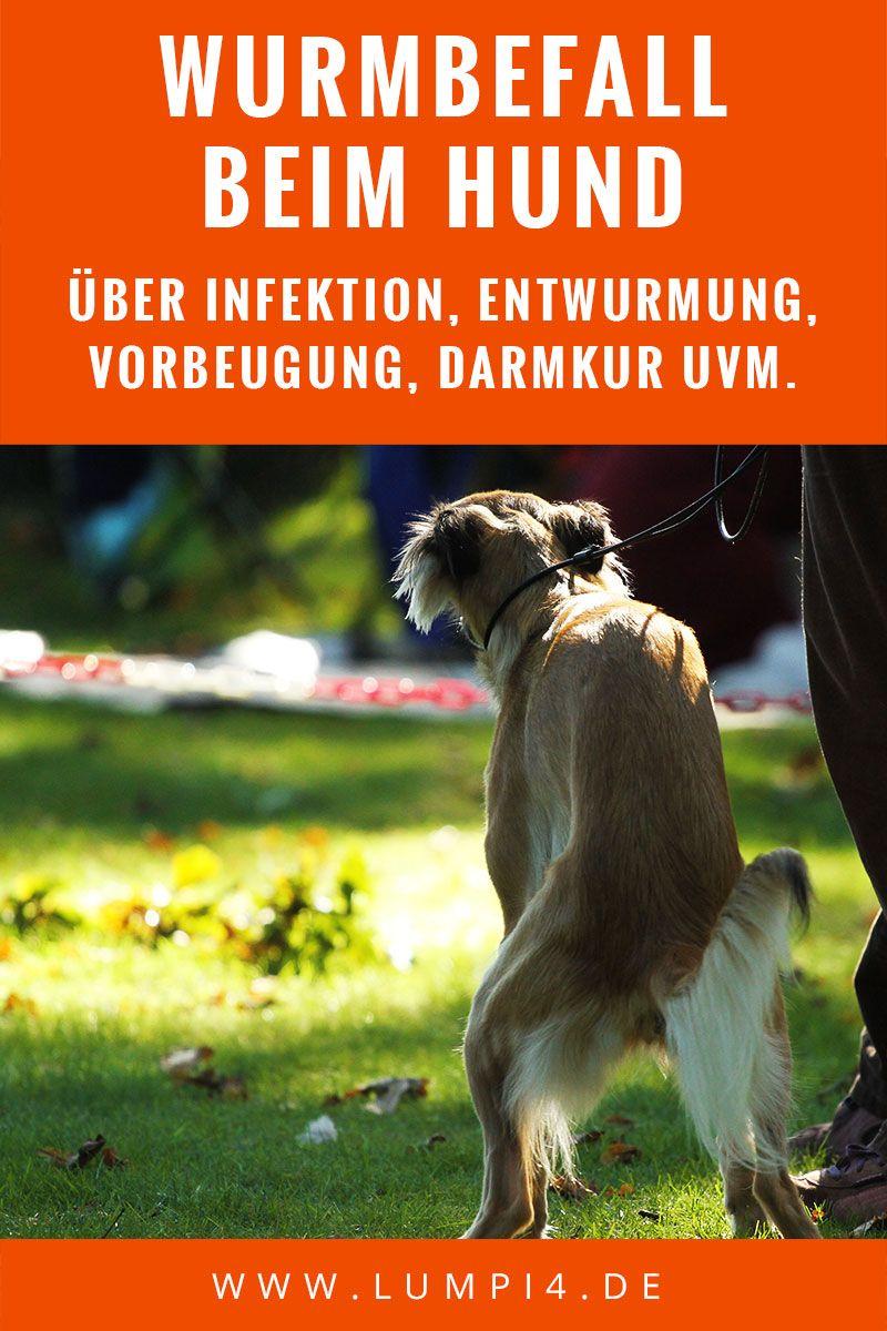 Da Ist Der Wurm Drin Wurmbefall Beim Hund Hunde Hundepflege Gesunde Hunde