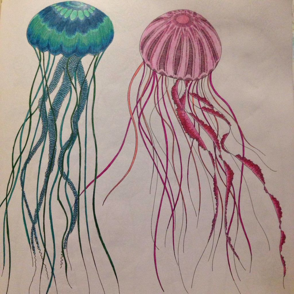 Jellyfish Animal Coloring Pages. Jellyfish  Millie Marotta My coloring pages Pinterest