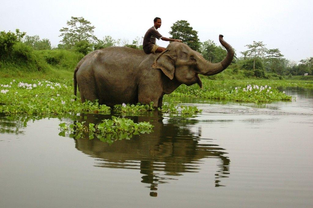 Nameri (22) Wildlife sanctuary, India tour, National parks