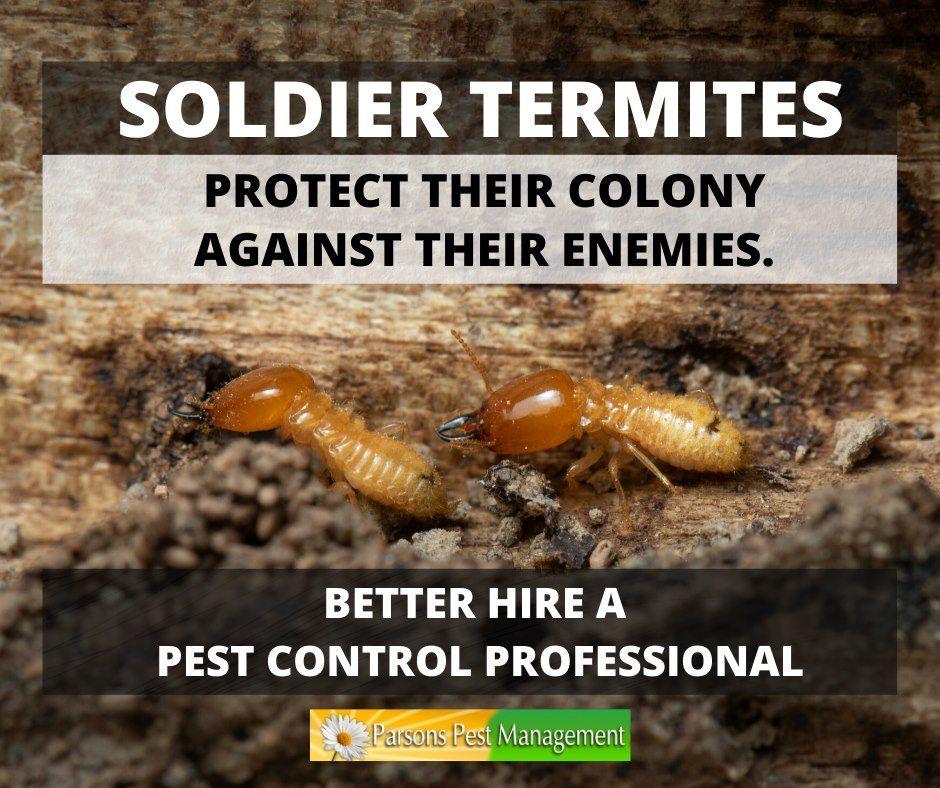Pin On Parsons Pest Management