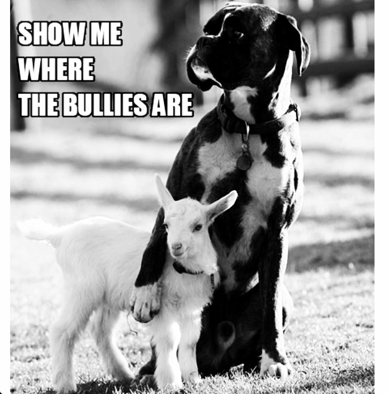 Don't be a bully, be a #hero.   Animal Support   Pinterest ...