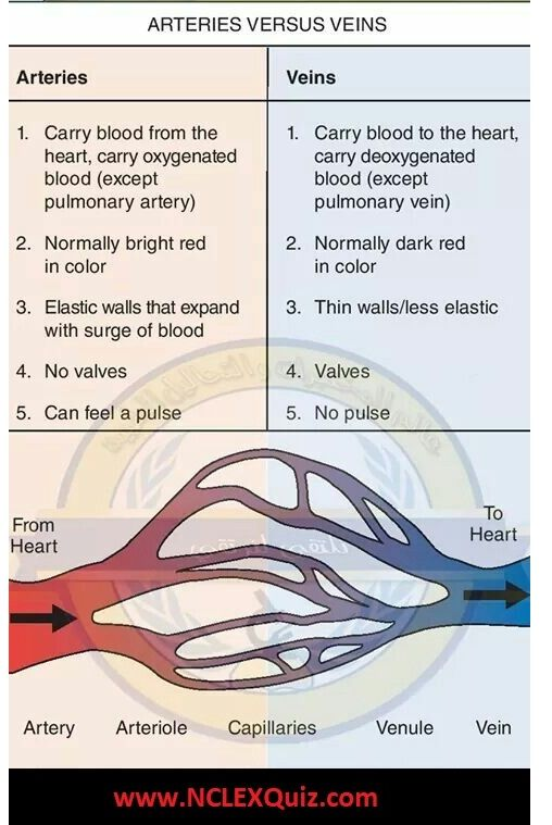 22232d4a26eb6248043a8091bc7714ea - How Does Blood Get From An Artery To A Vein