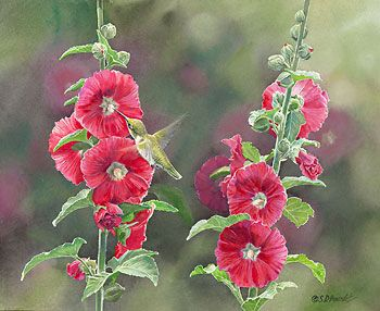 """Ruby & Hollyhocks - Ruby-throated Hummingbird"" - by Susan Bourdet"