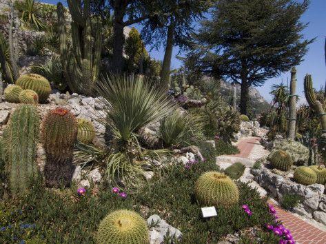 Botanic Garden Jardin Exotique Eze Village Alpes Maritimes