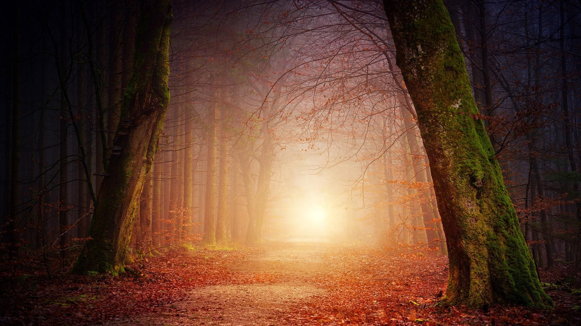 Red Forest 1920x1080 Aesthetic Wallpapers Nature Images Landscape