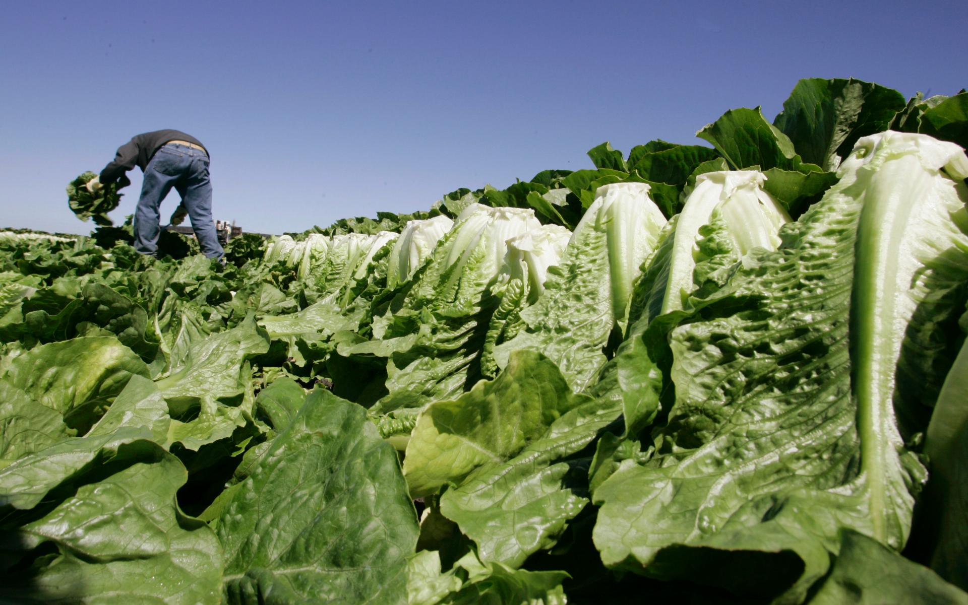 FOX NEWS Romaine lettuce E. coli outbreak tied to