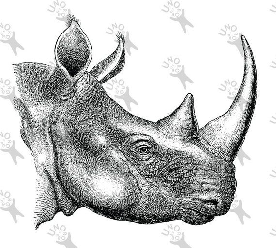 photograph regarding Rhino Printable identify Basic graphic Rhino retro drawing Instantaneous Obtain Electronic