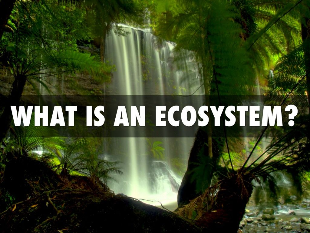 An Ecosystem Is A Biological Community Of Interacting