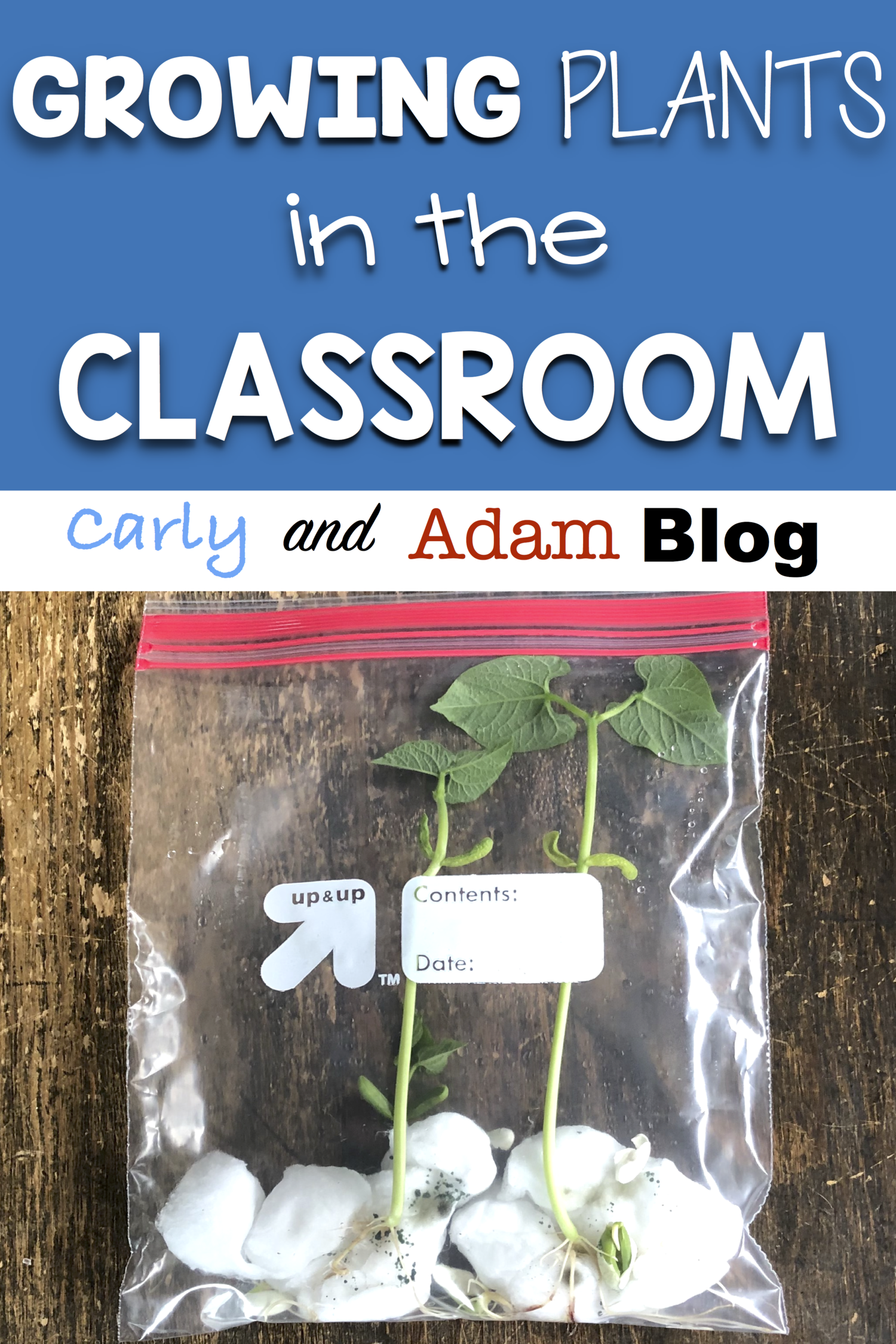 Growing Plants in the Classroom | Carly and Adam Blog Ideas, STEM