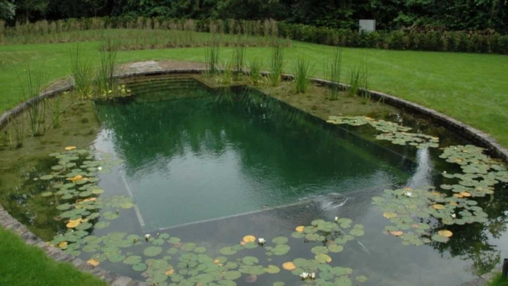 Image of Organic Swimming Pools | Swimming Pool | Landscaping ...