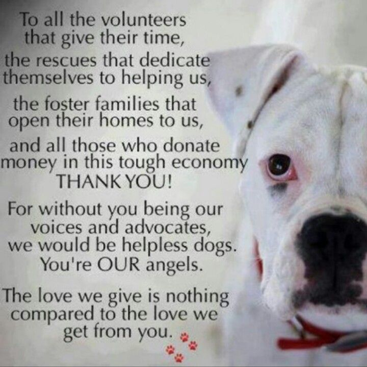 www.FloridaEnglishBulldogRescue.com
