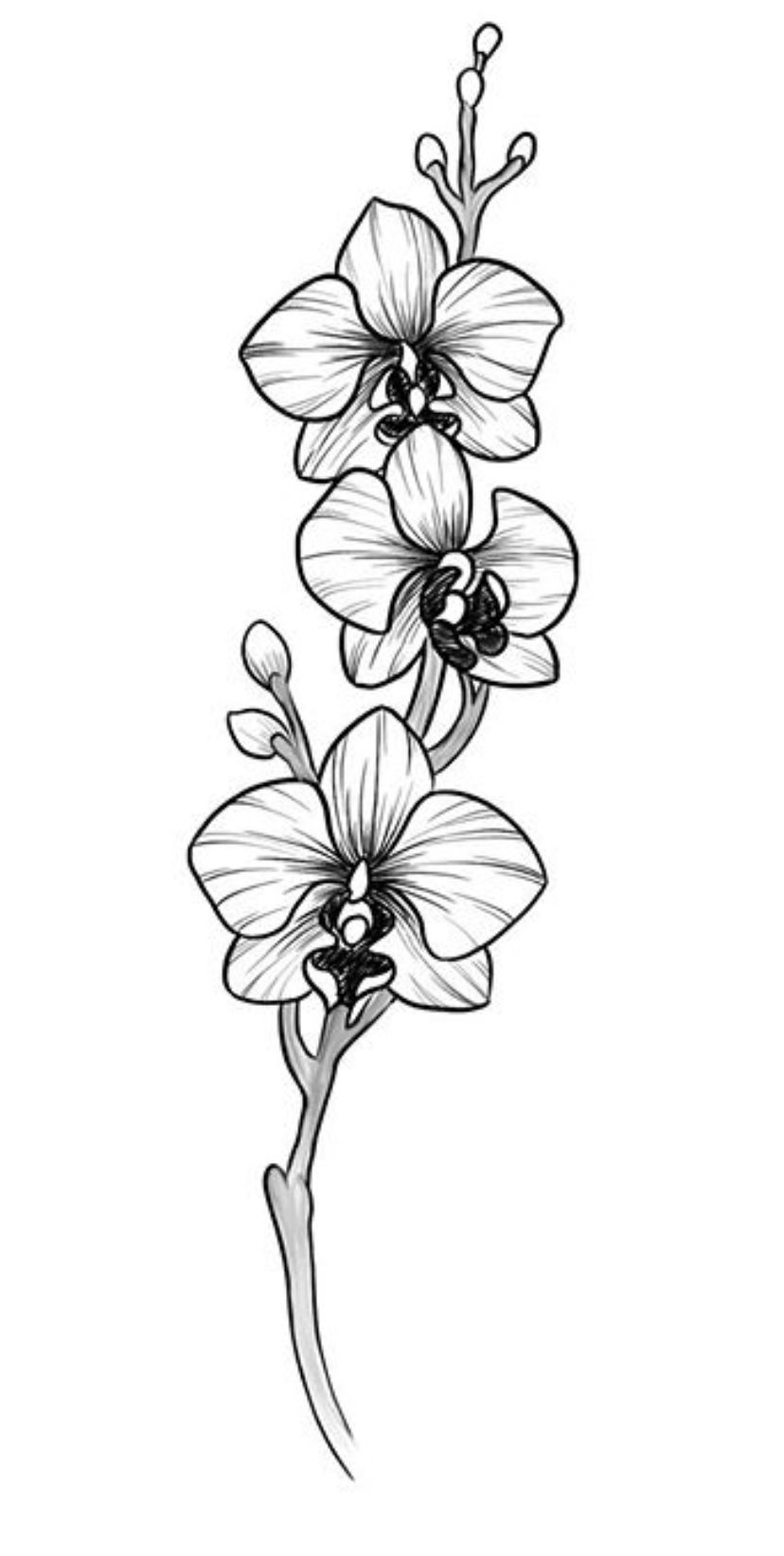 Orchids In 2020 Orchid Flower Tattoos Orchid Drawing Orchid Tattoo