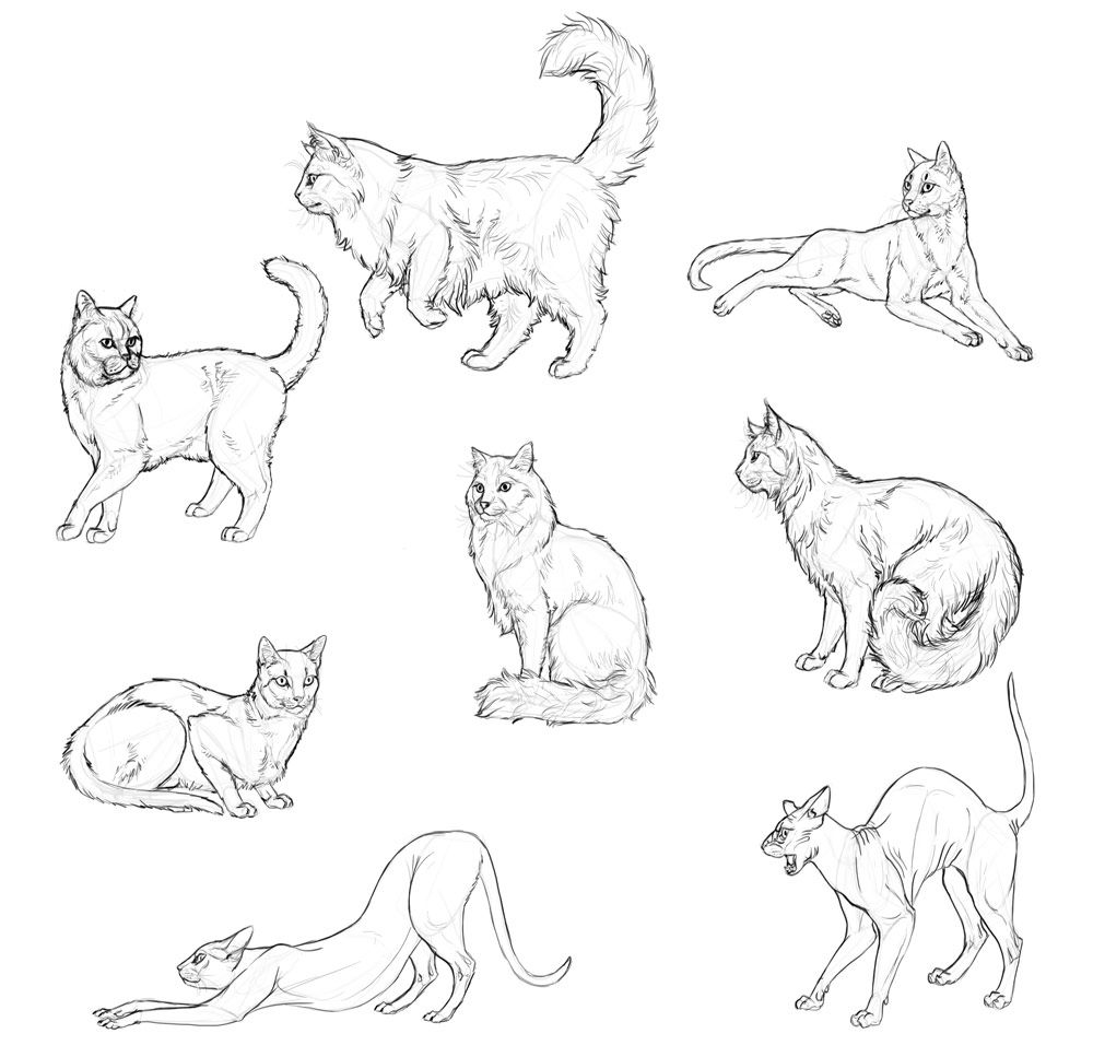 How to Draw Cats: Monika Zagrobelna\'s Detailed Approach — Monika ...