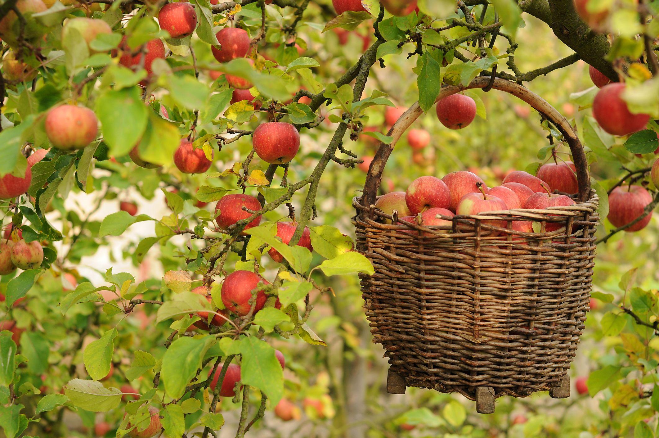 Lincoln county apple festival fall garden vegetables
