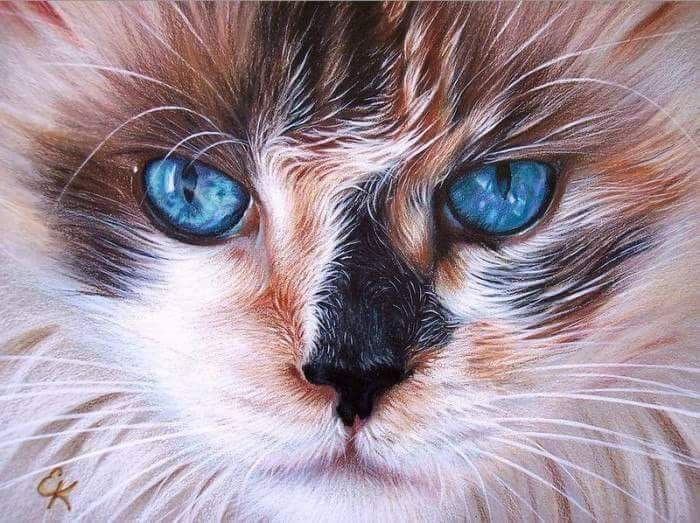 Pin von Griselda Bernardino auf ∆Яⅰㄅɬ ςЯ∆ɬ ς∆ɬㄅ Katzen