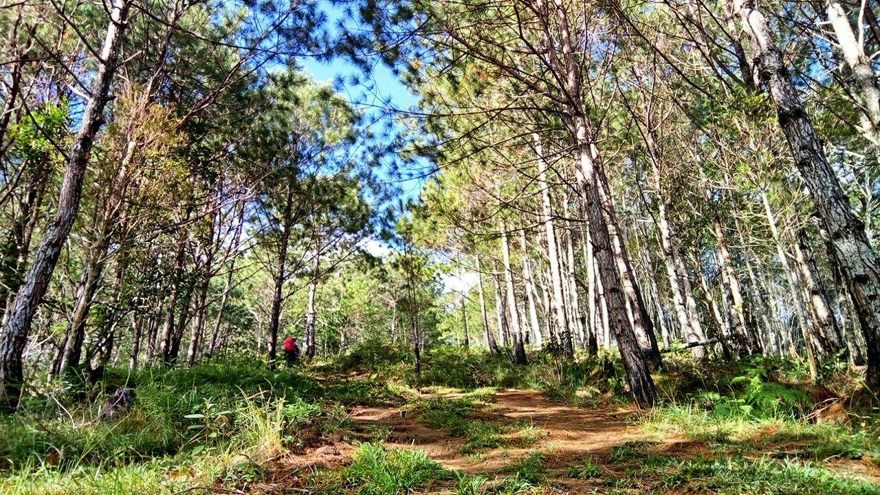Assault trail ahead! Mount Ugo Itogon, Benguet   My Hiking