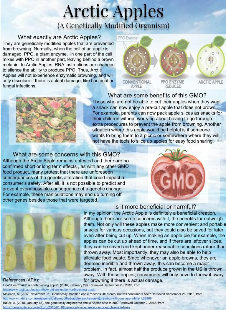 Gmo Apples Own Creation Genetically Modified Apple