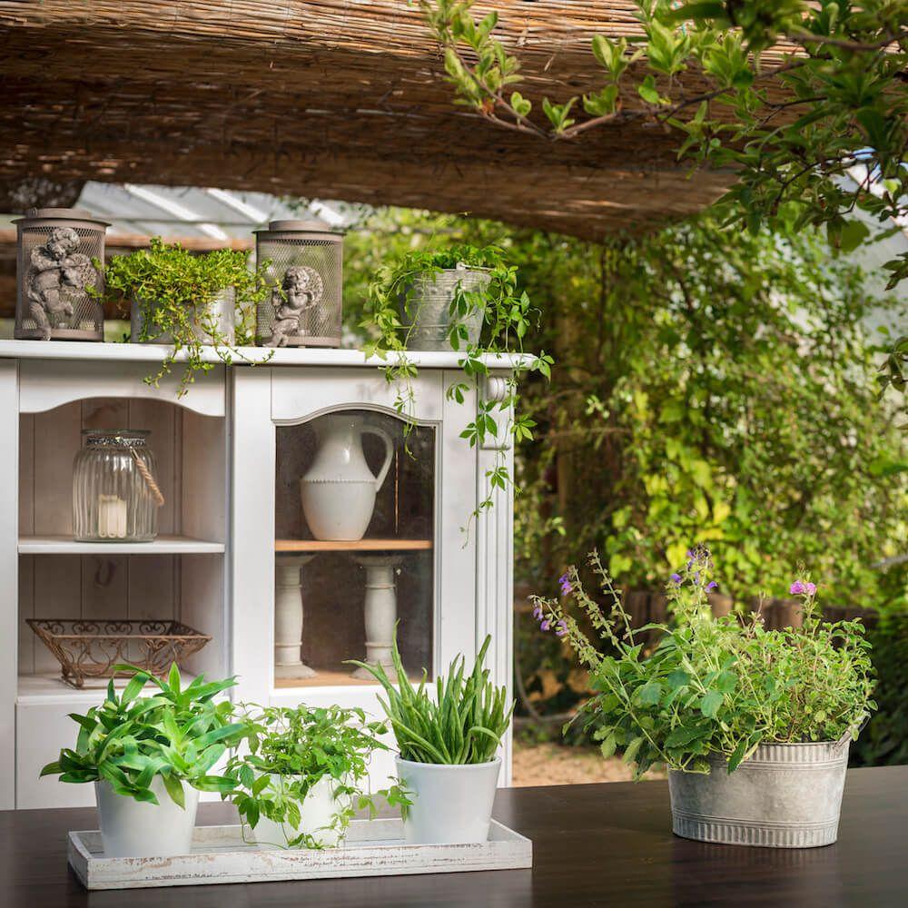 JungbrunnenSet Kräftige Pflanze online kaufen Hütten