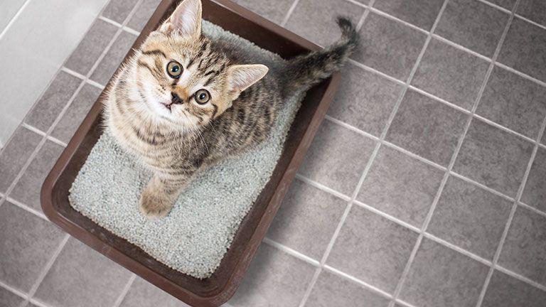 Best Litter Box For Kittens Kitty Catter Cat Litter Litter Box Best Litter Box
