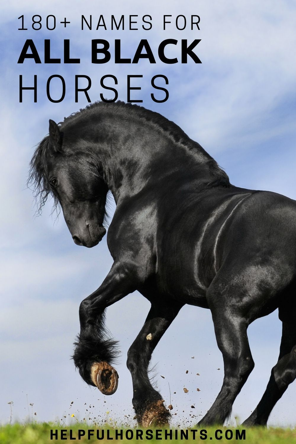 180+ Names for Black Horses in 2020 Black horses, Horses