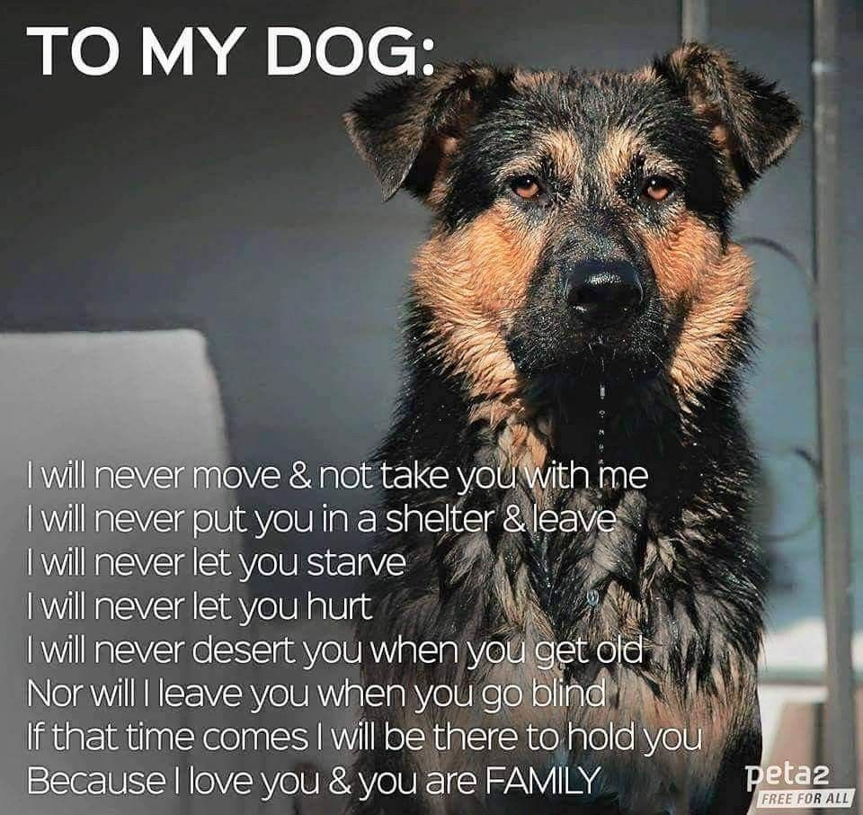 Pin By Deedles Mae West On Dogs Quotes Inspirations In 2020