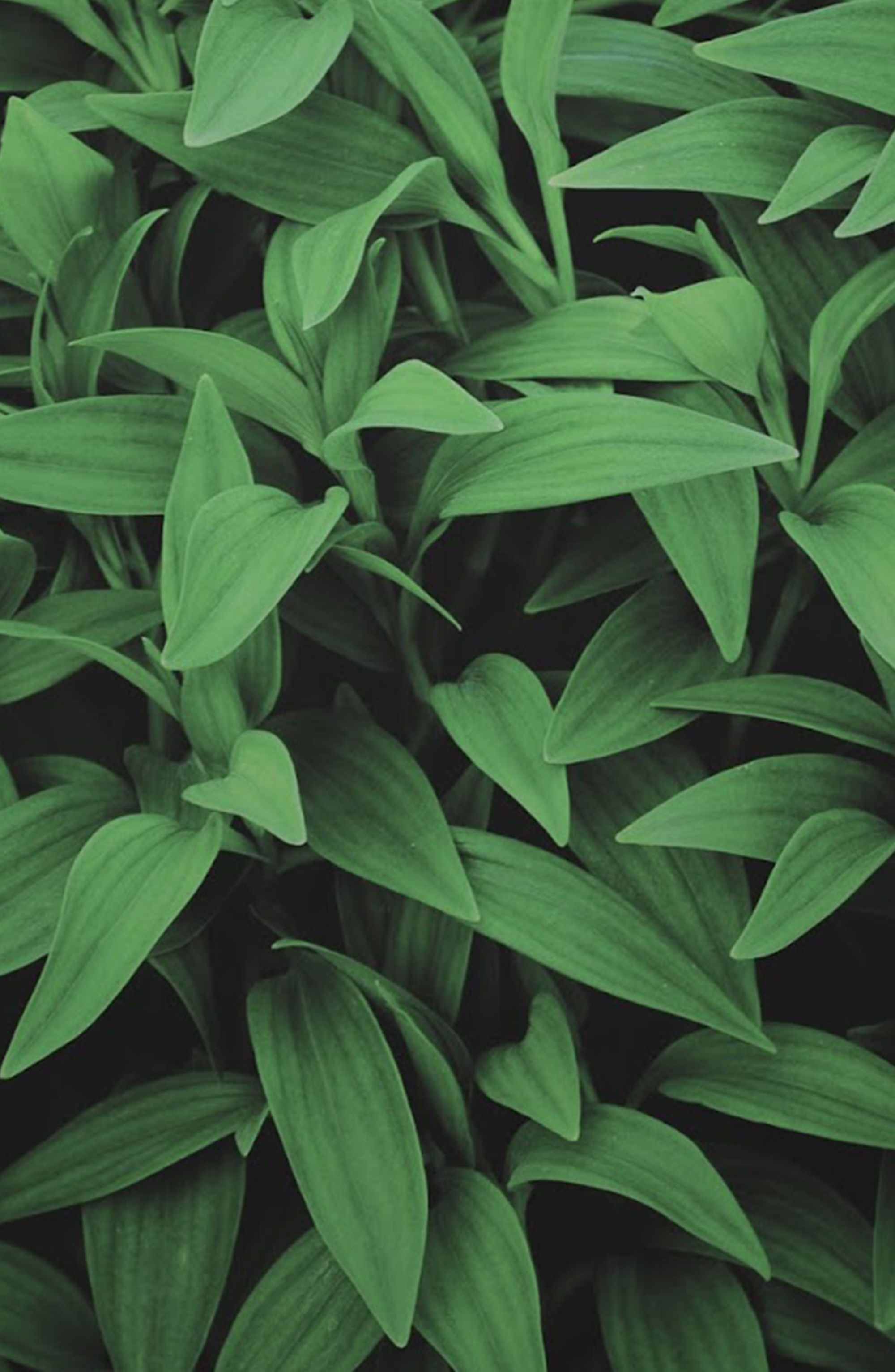 We Think Oppo Might Enjoy This One Leaves Wallpaper
