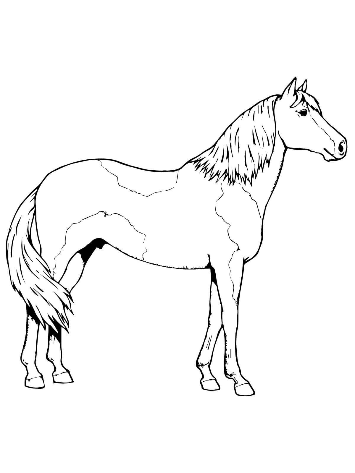 Horse Color Sheet For Kids Horse Coloring Pages Horse Coloring Coloring Pages [ 1600 x 1200 Pixel ]