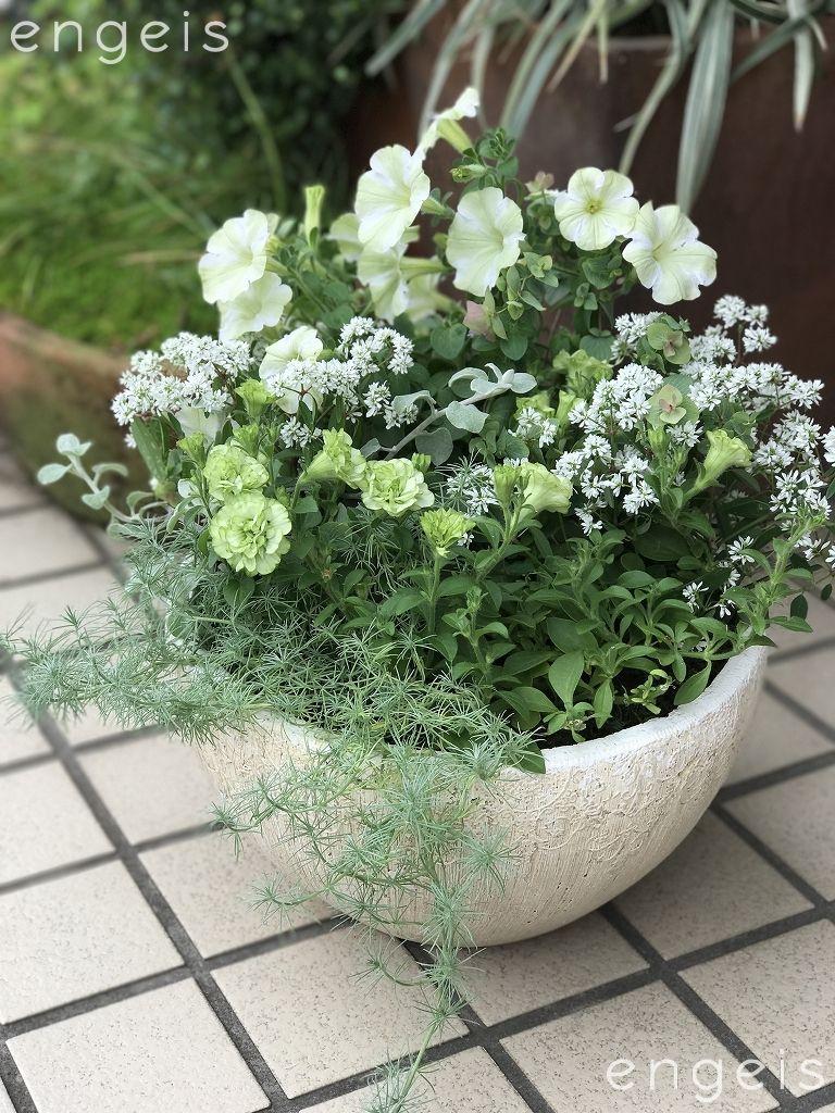 ホワイト グリーントーンの静かな寄せ植え 鉢植え 花 ガーデニング