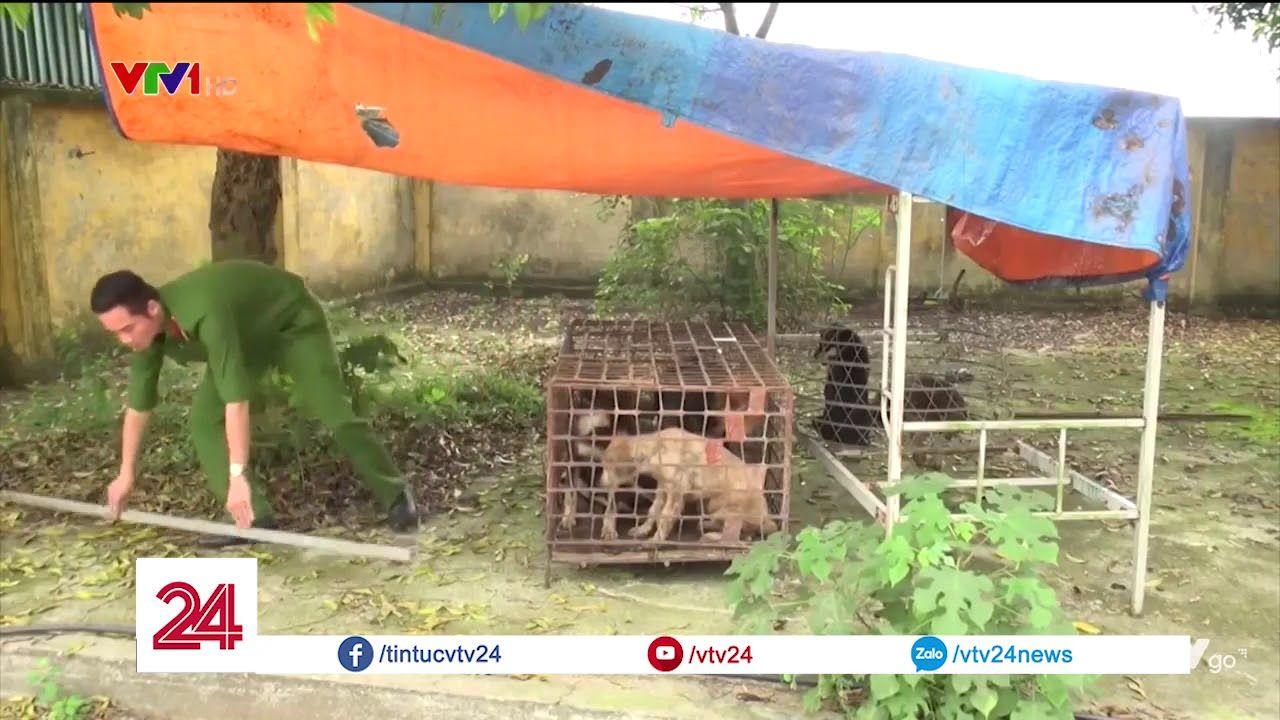 Bắt giữ đàn chó cắn bé trai 7 tuổi tử vong tại Hưng Yên