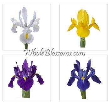 Iris Flowers Assorted Iris Flowers Assorted Is A Carefully Picked Variety Of Two Or More Gorgeous Colors This Iris Flowers Iris Wedding Flowers Iris Wedding