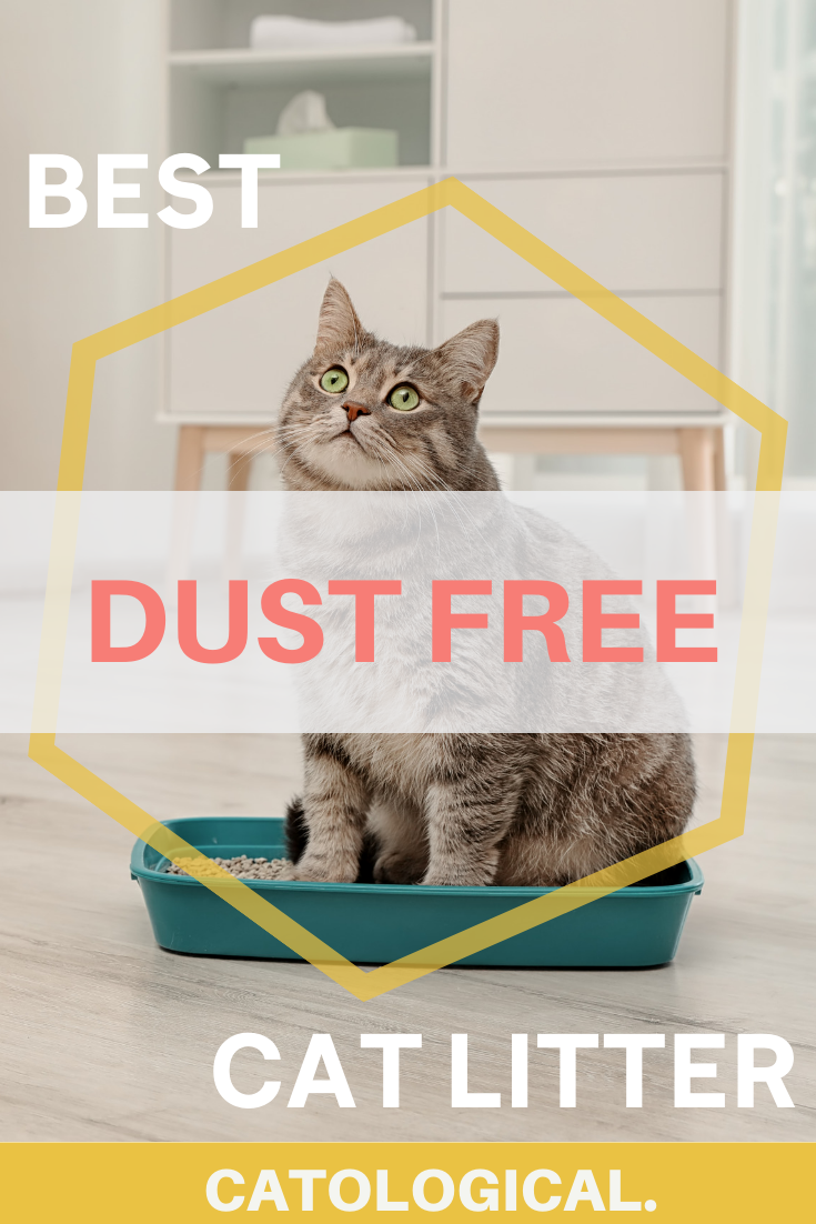The Worst Part Of Being A Cat Owner Being Allergic To Your Feline Friend S Litter Many Cat Litters Can Promote Dust And Free Cats Kitten Care Best Cat Litter