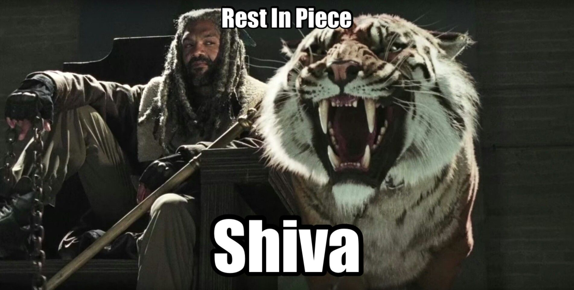 Pin By Sharon Walters On 1my Twd The Walking Dead Shiva