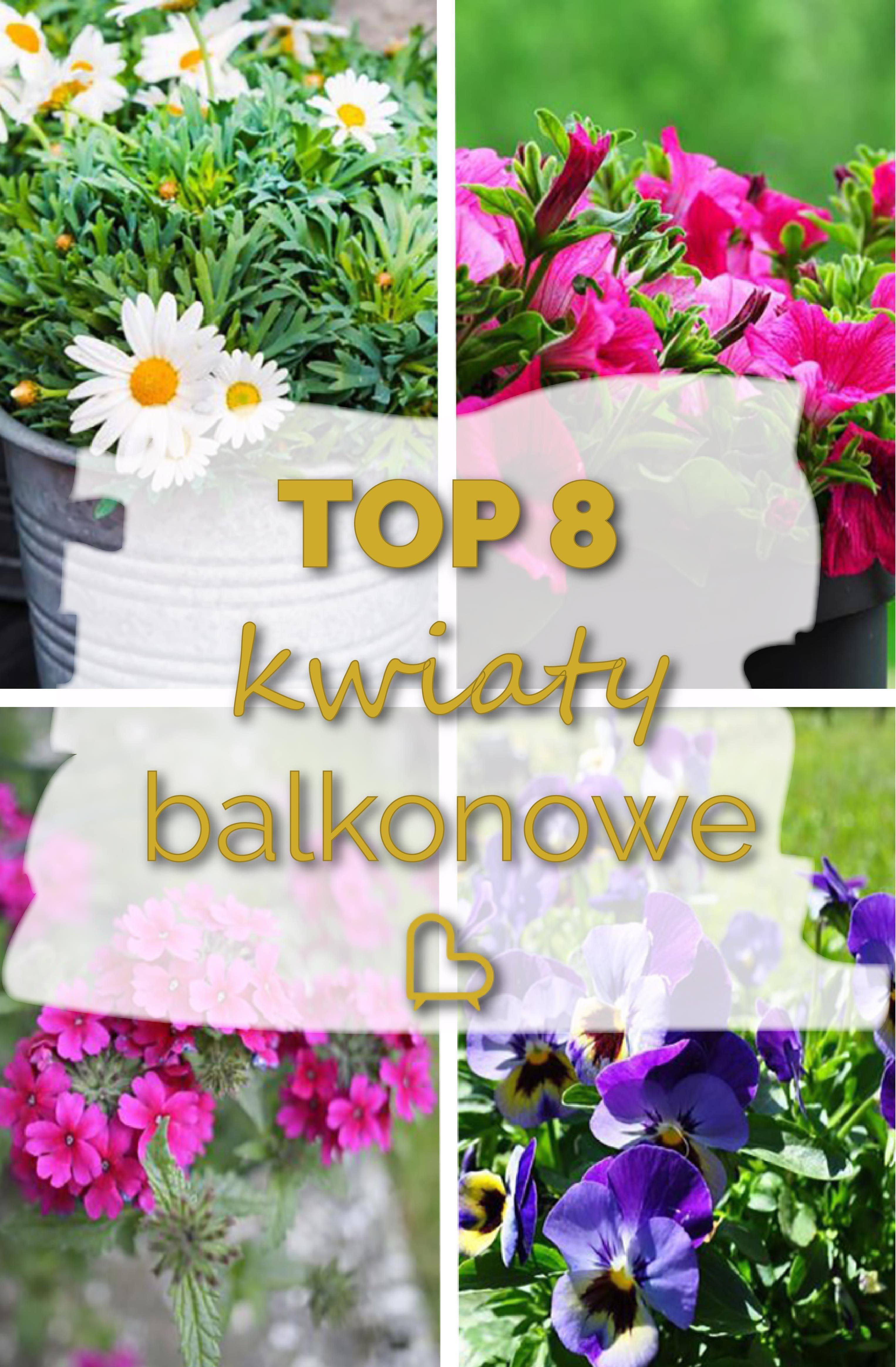 Najlepsze Kwiaty Balkonowe Jakie Wybrac Kwiaty Na Balkon Kwiaty