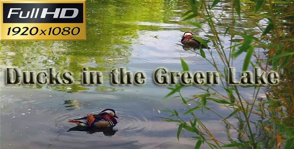 DOWNLOAD :: https://vectors.pictures/article-itmid-1002685633i.html ... Ducks In The Green Lake ...  animal, bio, bird, duck, green, hunt, lake, life, nature, ornithology, park, river, wild  ... Templates, Textures, Stock Photography, Creative Design, Infographics, Vectors, Print, Webdesign, Web Elements, Graphics, Wordpress Themes, eCommerce ... DOWNLOAD :: https://vectors.pictures/article-itmid-1002685633i.html