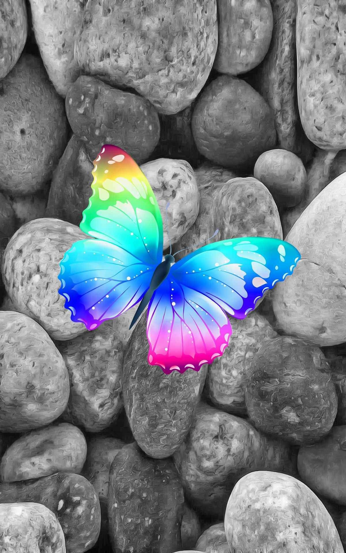 Splash Butterfly With Images Rainbow Pictures Colorful