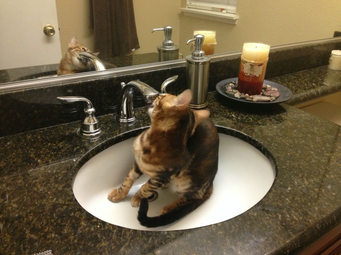 Mia love\'s to drink water from the Faucet | Mia | Pinterest